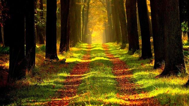 estudios forestales